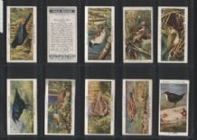 Tobacco Cigarette cards Wild Birds 1932 set of 50